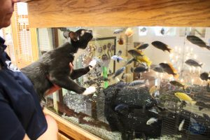 Cat and Fish Tank