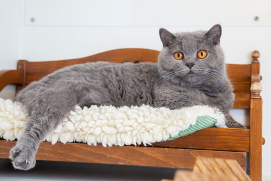 Cat in a luxury bed