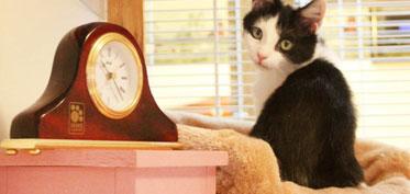 Cat in a condo