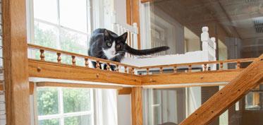 Cat in a luxury suite
