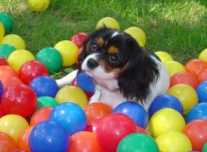 Dog hiding in play balls
