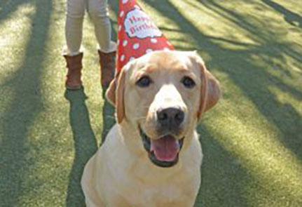 Dog wearing a birthday hat