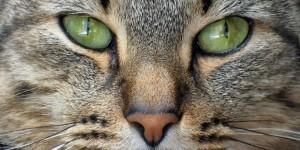 cat-nose