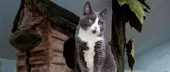 Cat in a cat house
