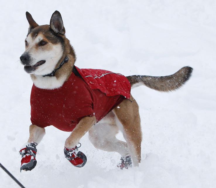 ruffwear_bark_n_boots_polar_trex_insulated_dog_boots_1306927_8_og