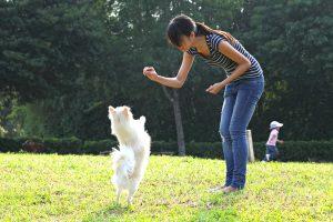 dog training camp
