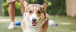 Special needs dog