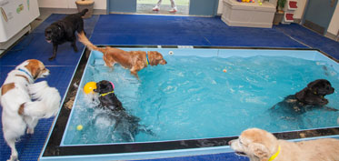 Group of dogs in the pool
