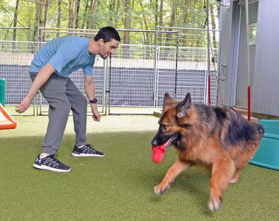 Staff playing with dog during training