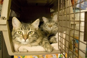 two-cats-in-a-carrier