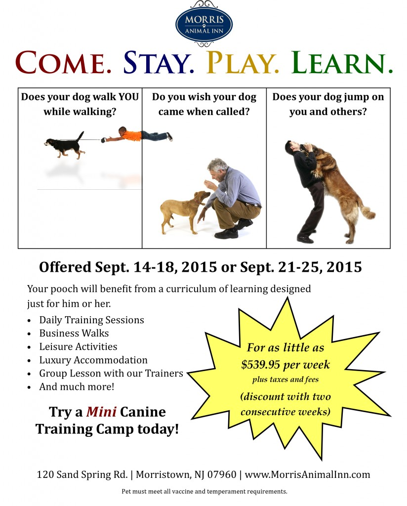 mini dog training camp